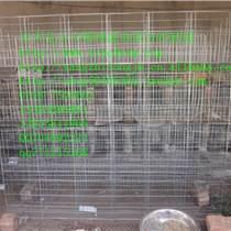 雞籠/蛋雞籠/肉雞籠/雛雞籠/小雞籠/草雞籠