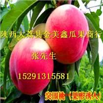 陜西毛桃價格2016鄭三毛桃價格