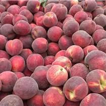 渭南毛桃超紅圣桃價格供應陜西超紅圣毛桃