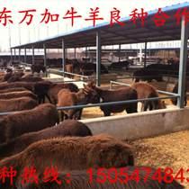 濟寧肉驢養殖
