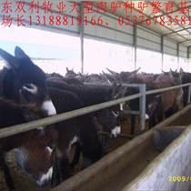 山東雙利牧業肉驢養殖場、肉驢價格 小驢價格、肉驢養殖技術