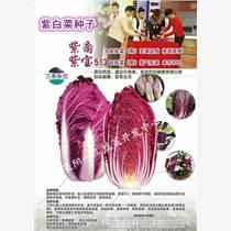煙臺其他紫白菜種子銷售原裝現貨
