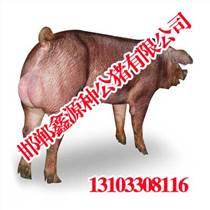 邯郸种猪精液招商,鑫源