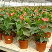 北京花卉销售销售哪家比较好