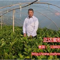 福建正達三紅蜜柚種苗有限公司