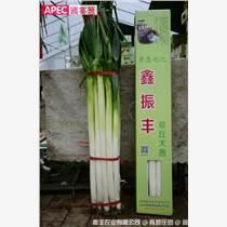 正宗章丘大蔥APEC國宴用蔥富硒大蔥