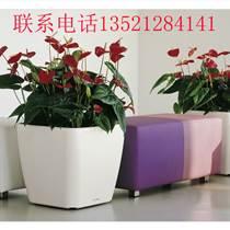 北京办公室花卉租赁