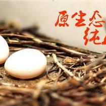 淮安鸽子蛋(小孟鸽)人们生活中