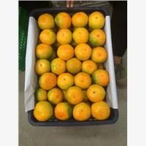 广州市江南水果市场代卖