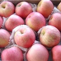 水晶優質紅富士蘋果冷庫蘋果批發報價