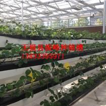 山東草莓立體式無土栽培種植槽廠家