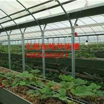 山東大棚草莓種植槽廠家