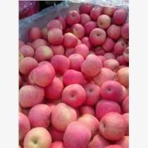 冷庫紅富士蘋果批發蘋果銷售價格