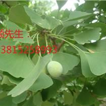 蘇州私家庭院綠化、蘇州企業綠化