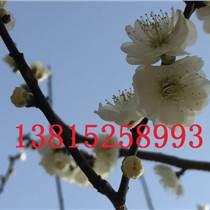 庭院別墅景觀綠化設計、花園綠化工程設計、蘇州景觀設計、蘇州綠化苗木公司,造型樹古樁基地