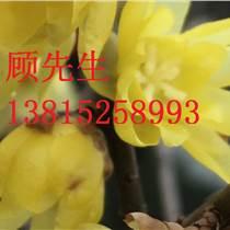 蘇州別墅庭院景觀設計、綠化景觀工程施工、蘇州花園景觀工程、綠化苗木苗圃,蘇州花木