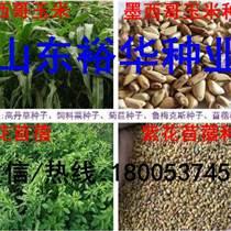 如何种植黑麦草品种产量高现在黑麦草种子多少钱一斤