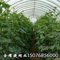 蔬菜用遮陽網_苗木遮陽網【金耀捷】現貨