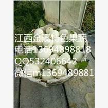 2017预售白玉甜瓜种子