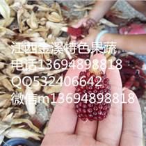 草莓玉米種子草莓玉米圖片