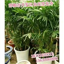 邯鄲花卉門市,邯鄲花卉種類,仙花堂花卉