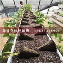 邢臺蔬菜種植槽廠家