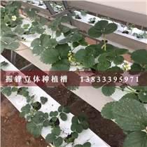 邯郸瓜果蔬菜立体式种植槽价格