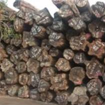 進口非洲原木鐵木豆原木
