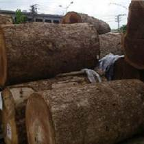 进口缅甸金丝楠木原木