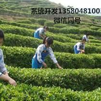 茶叶种植溯源系统开发订制 互联网&茶叶安全可溯源