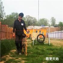 韩村河护卫犬训练 韩村河护卫犬训练哪家好 恩宠天地供