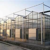 新型溫室大棚、新疆大跨度溫室大棚