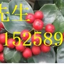 蘇州鴻運果,蘇州別墅精品造型鴻運果,綠化苗木古樁價格