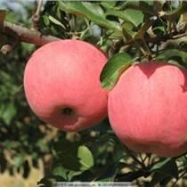 出售2公分蘋果樹3公分蘋果樹4公分蘋果樹5公分蘋果樹