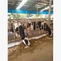 微生态制剂反刍动物牛羊养殖专用