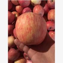 陜西庫存紅富士蘋果價格冷庫紅富士蘋果基地
