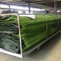 铁力批发草坪种子出厂价格