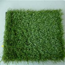 昆明批发草坪种子公司有哪些