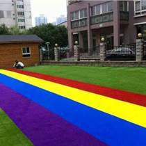 樟樹秋草優質幼兒園草坪批發