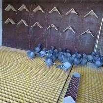 玻璃鋼格柵養殖鴿舍漏糞篦子格柵直銷
