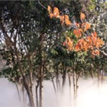 雾森系统功能