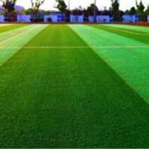云南运动场休闲人造草坪铺设|多少钱_陕西绿昂体育