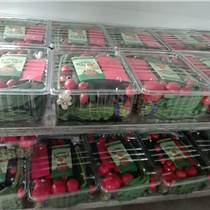 食品級透明塑料蔬菜盒蛋糕點心盒