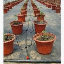 花卉盆栽滴箭灌溉系統