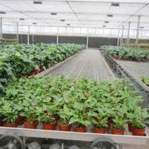 移動苗床-移動苗床價格-移動苗床廠家-移動的小花園-