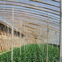 现权防水养殖大棚安装
