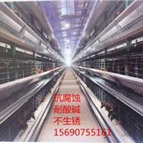畜牧設備生產成套自動化飼養設備公雞籠種蛋雞籠等