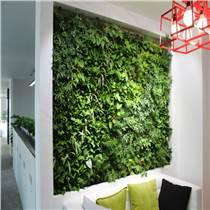 植物墻立體綠化廠家