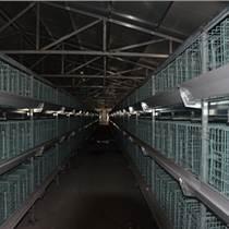 河南西平畜牧全自動養雞設備層疊蛋雞籠階梯雞籠