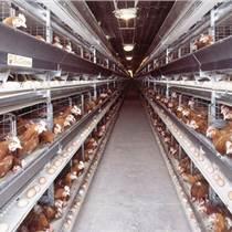 河南西平現代化畜牧設備廠家生產優質養雞設備